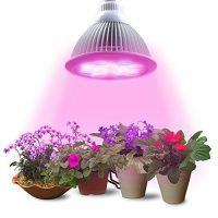 Pflanzenlampe
