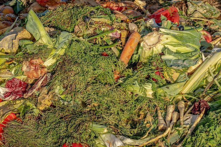 Bio Müll